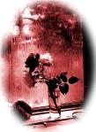 Doisneau Rosas